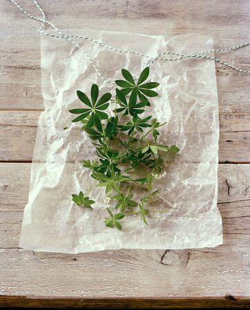parchment paper: Fresh woodruff on parchment paper LANG_EVOIMAGES
