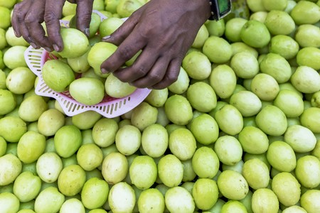 jujube fruits: Hands sorting jujube fruits at a market in Myanmar LANG_EVOIMAGES