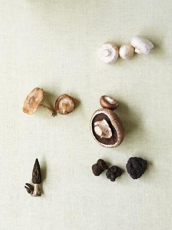 giant mushroom: Assorted mushrooms (Champignons, Portobello, Morels, Truffles)