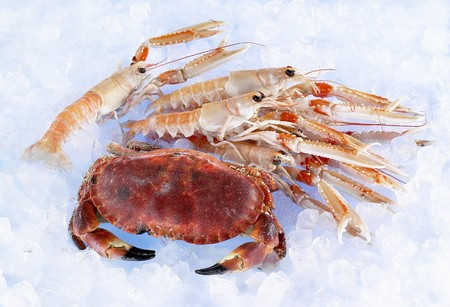 norvegicus: Whole crab and lobster on ice