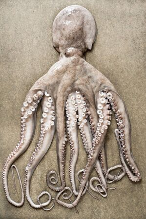 entire: An entire octopus