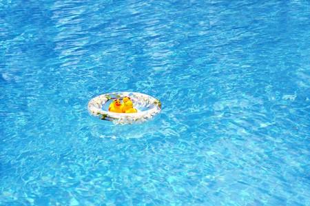 pato de hule: Un pato de goma en un anillo de goma en una piscina