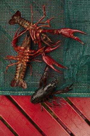 langouste: Fresh Crawfish LANG_EVOIMAGES