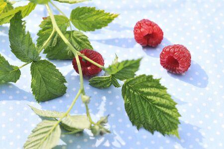 aliments: Trois framboises avec un brin et les feuilles