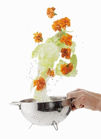 lettuces: Iceberg lettuces and marigolds being washed
