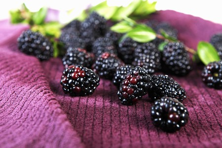 brambleberry: Moras frescas en una toalla; Hojas LANG_EVOIMAGES