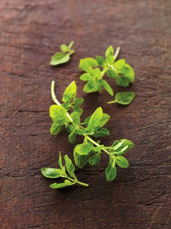 wild marjoram: Fresh Oregano on Wood