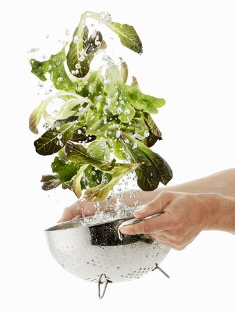 being: Lettuce being washed