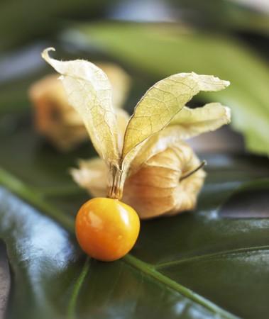 cape gooseberry: Cape gooseberry on a leaf (close up)