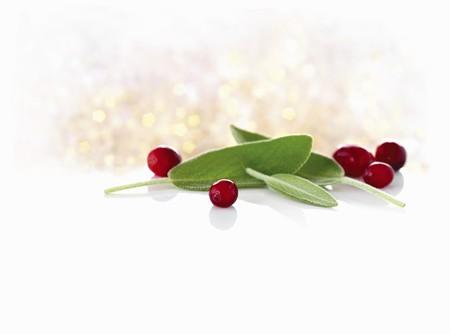 vaccinium macrocarpon: Sage and cranberries LANG_EVOIMAGES