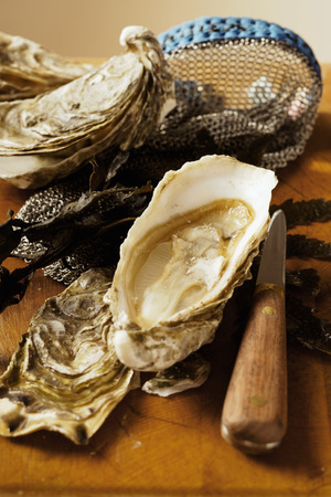 brownness: Fresh oysters, oyster glove and oyster knife LANG_EVOIMAGES
