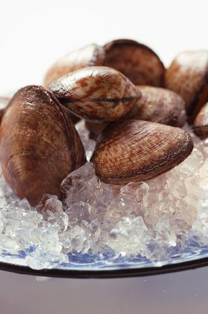 ice crushed: Tweekleppige schelpdieren op plaat met crushed ijs