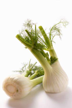 foeniculum vulgare: Fresh fennel