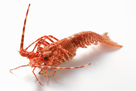 langouste: Spiny lobster (side view)