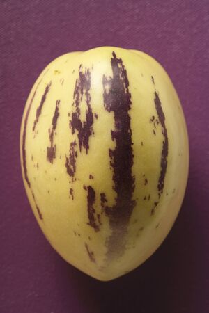 pepino: Pepino melon on purple background