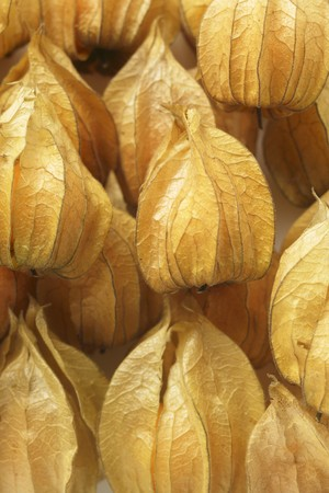 calyxes: Several Physalis with calyxes (close-up) LANG_EVOIMAGES