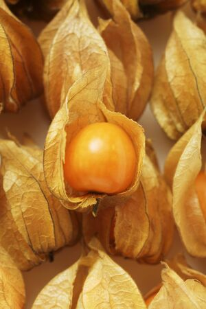 calyxes: Several Physalis with and without calyxes (close-up)