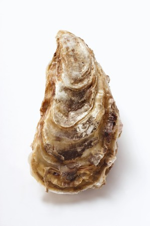 noone: A fresh oyster