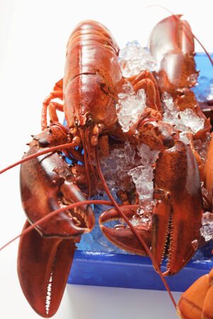 crushed ice: Lobster on crushed ice