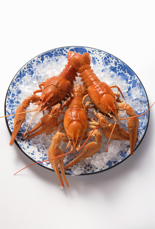 ice crushed: Freshwater crayfish on plate with crushed ice