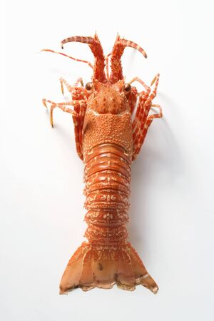 spiny lobster: Spiny lobster from above