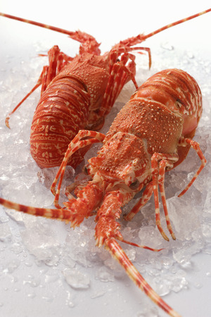 langouste: Two spiny lobsters on crushed ice
