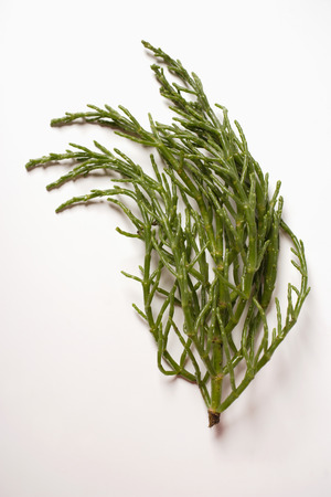 passe: Marsh samphire on white background LANG_EVOIMAGES