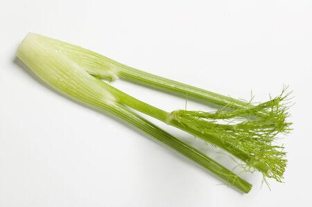 apium graveolens: Fennel