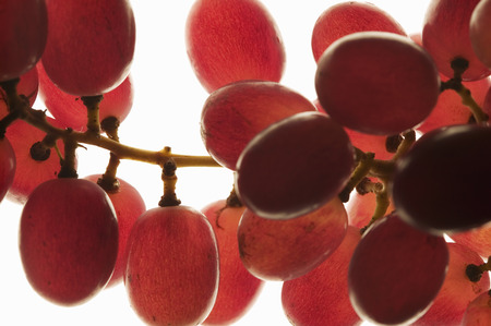 backlit: Red grapes, backlit LANG_EVOIMAGES