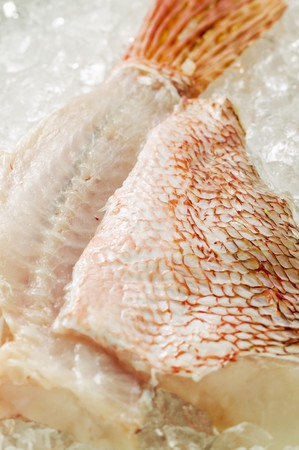 stingfish: Scorpion fish fillets on ice LANG_EVOIMAGES