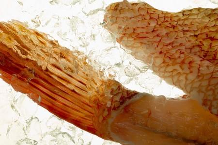 stingfish: Grouper, backlit