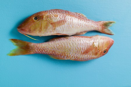mullet: Two red mullet on blue background
