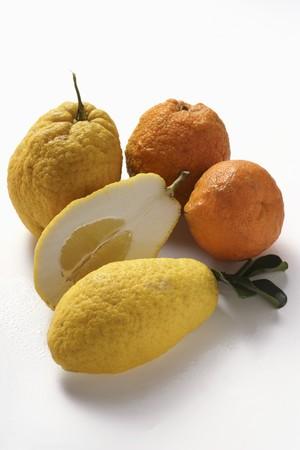citrons: Citrons and ugli fruits