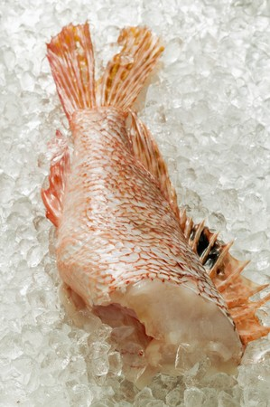stingfish: Scorpion fish fillet on ice LANG_EVOIMAGES