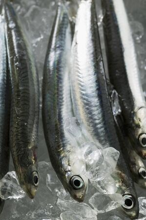 chilled out: Several fresh anchovies on ice