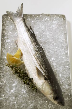 mullet: Grey mullet on ice