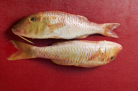 goatfish: Two red mullet on red background LANG_EVOIMAGES