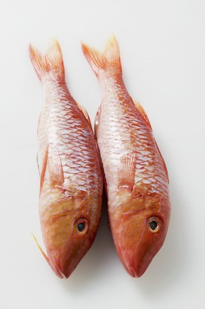 mullet: Two fresh red mullet