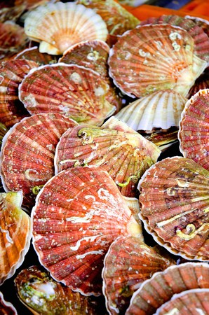 coquille: A crate of fresh scallops