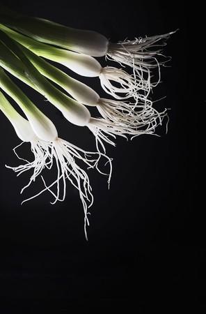 backlit: Back-lit spring onions LANG_EVOIMAGES