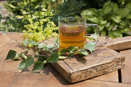 alchemilla mollis: Birch leaf tea