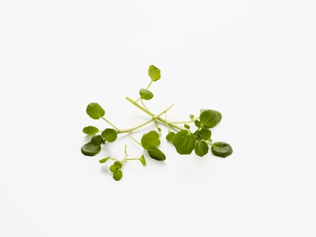 water cress: Watercress on a white surface
