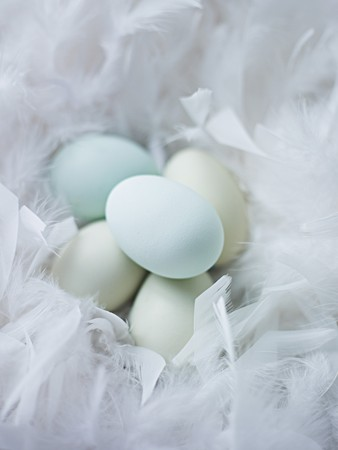 no way out: Blue eggs in a nest of soft feathers LANG_EVOIMAGES