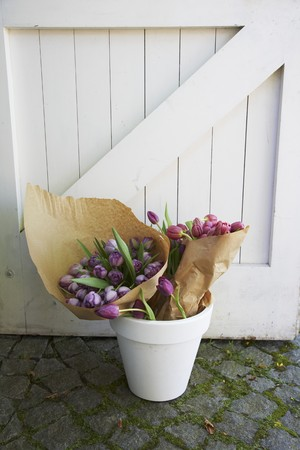 flowerpot: Bunches of pink and purple tulips wrapped in paper in a white flowerpot in front of a white wooden gate