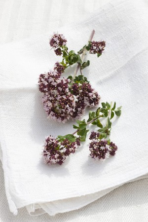 origanum: Flowering origanum on a linen cloth outside