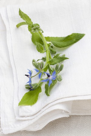 alfresco: Flowering borage on the linen cloth outside