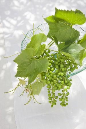hojas parra: Hojas de vid y verdes, uvas verdes en un vidrio de la torta se destacan como decoraci�n en una mesa de jard�n