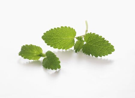 lemon balm: Fresh lemon balm LANG_EVOIMAGES