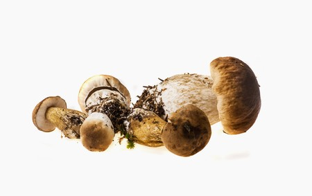 cepe: Fresh porcini mushrooms
