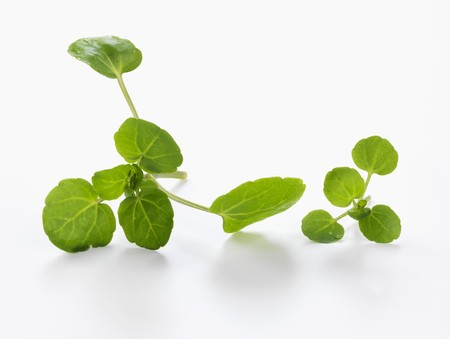water cress: Fresh watercress